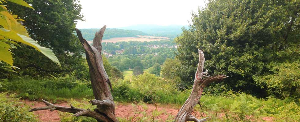 View of St Martha From The Chantries in Guildford